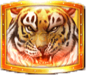 Tigers Glory video slot gokkast - Tijger symbool