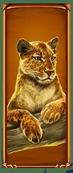 Wild Cats video slot - Leopard symbol