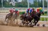 vergunning wedden paardenraces 2022
